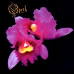 Opeth - Orchid (2xLP, RE, Whi).jpeg